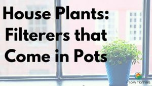 house plants filter